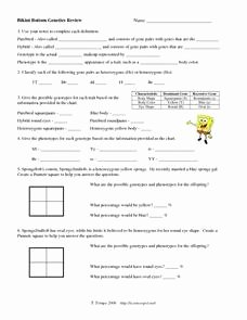 Genetics Worksheet Answer Key New Bikini Bottom Genetics Review 9th 12th Grade Worksheet
