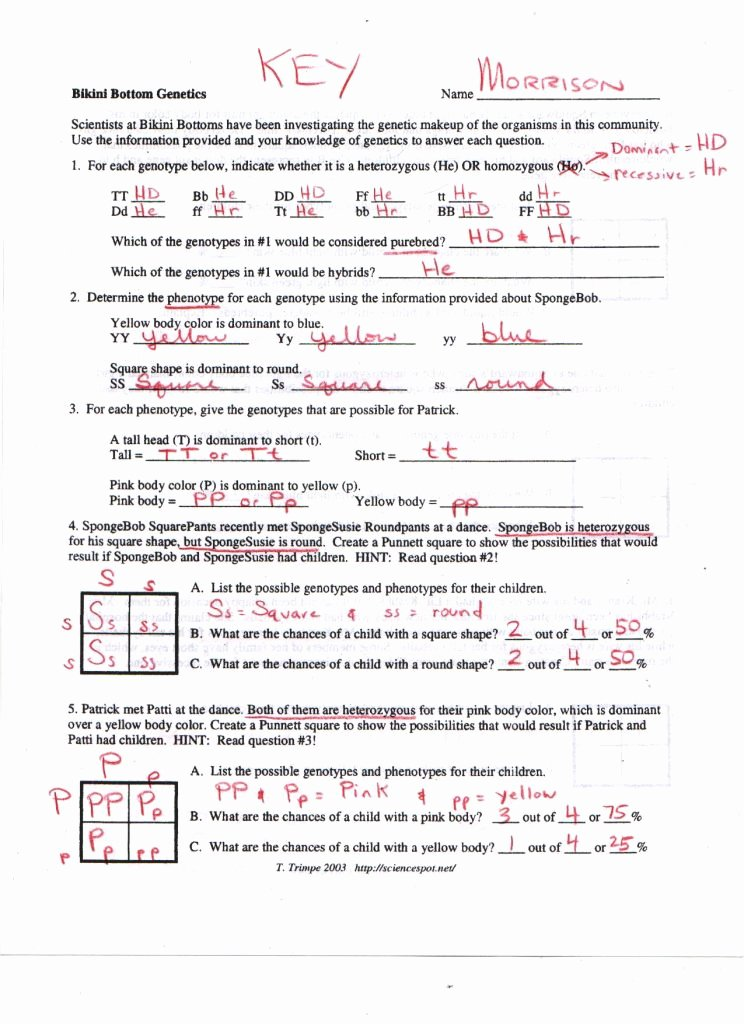 Genetics Worksheet Answers Key Elegant Genetics Worksheet Answer Key Math Worksheets Dragon 1 Im