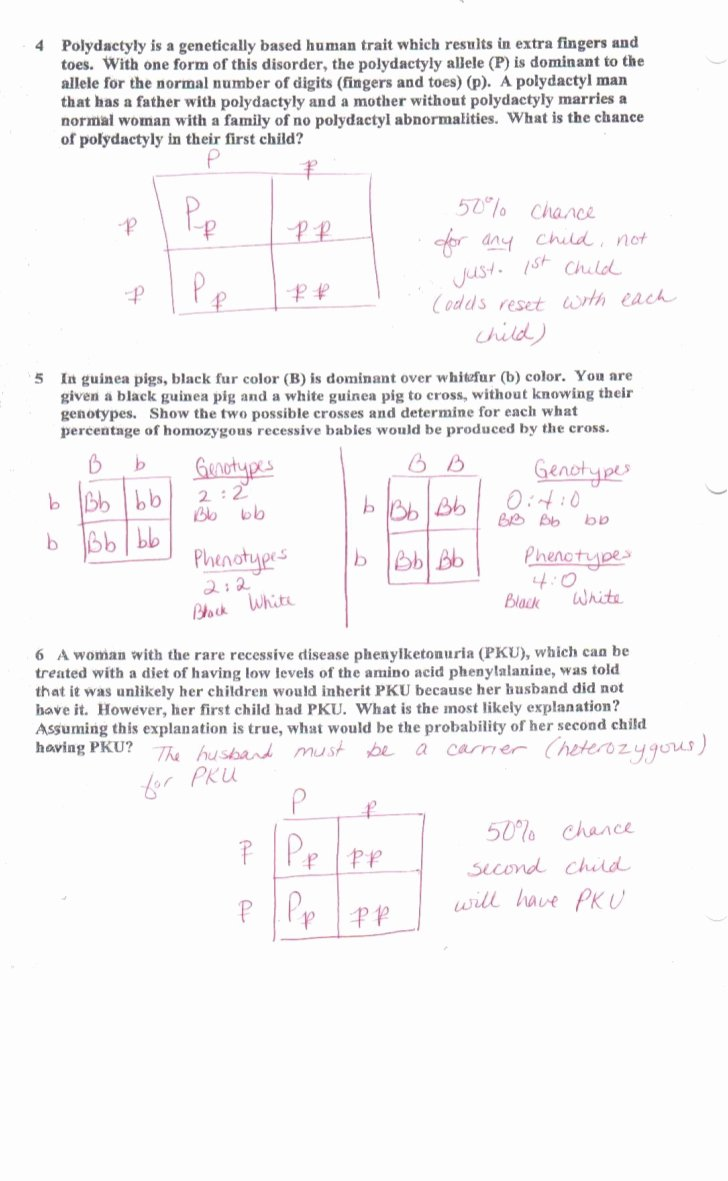 Genetics Worksheet Answers Key Luxury More Zork Genetics Worksheet Answer Key