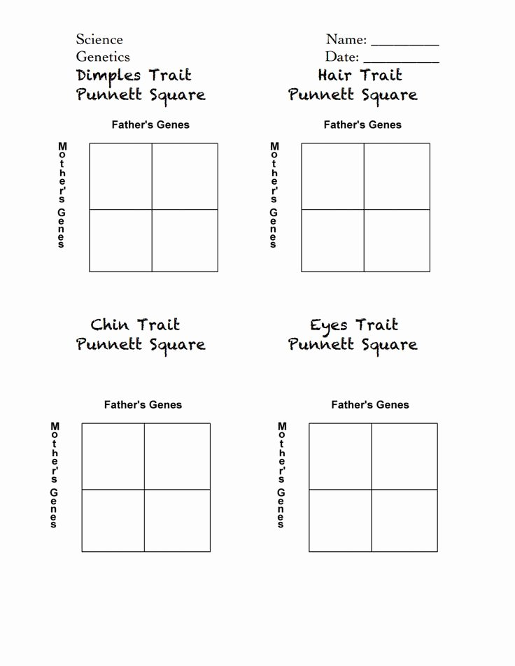 Genetics Worksheet Middle School Fresh Celebrity Punnett Squares Handout Pdf Genetics