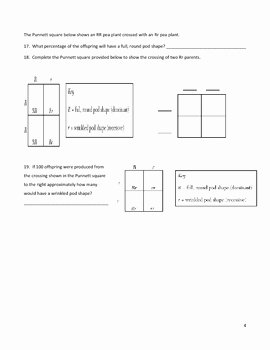Genetics Worksheet Middle School Fresh Middle School Biology Genetics Worksheet Punnett Squares