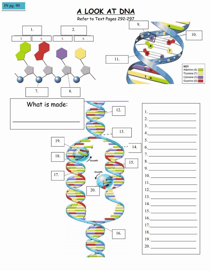 Genetics Worksheet Middle School Lovely Pin by Biology Roots