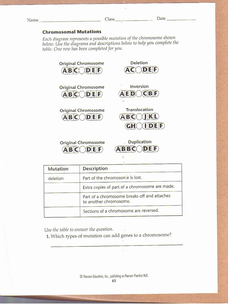 Genetics Worksheet Middle School New Chromosomal Mutations Worksheet Education
