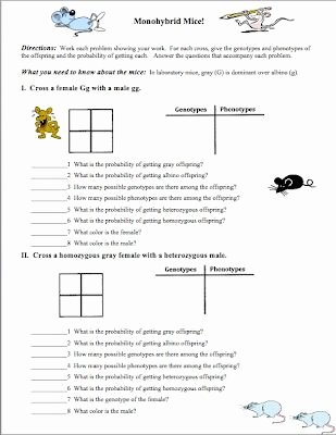 Genetics Worksheet Middle School New Pin On Science Ideas