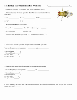 Genetics X Linked Genes Worksheet Luxury Linked Traits Worksheet