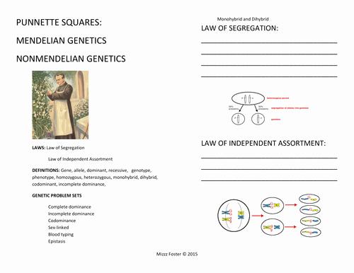 Genetics X Linked Genes Worksheet New Genetics Punnett Squares Mendel Non Mendelian Student