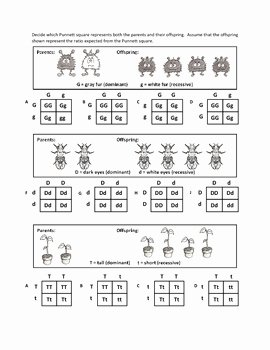 Genotypes and Phenotypes Worksheet Answers Beautiful Genotypes and Punnett Square Worksheets by Haney Science