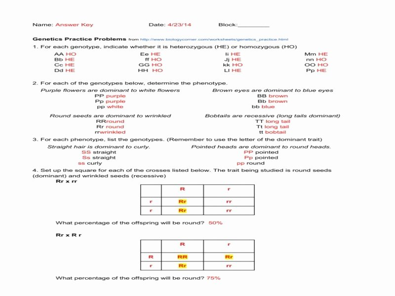 Genotypes and Phenotypes Worksheet Answers New Genotype and Phenotype Worksheet Answers Free Printable