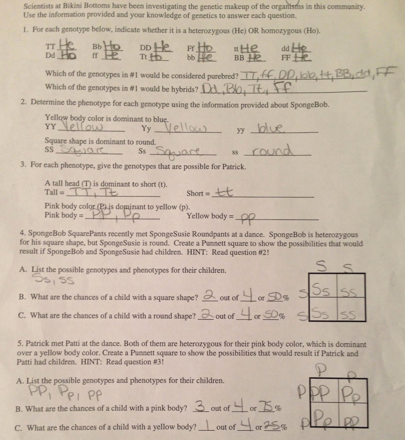Genotypes and Phenotypes Worksheet Answers Unique Worksheets Genotype and Phenotype Worksheet Cheatslist
