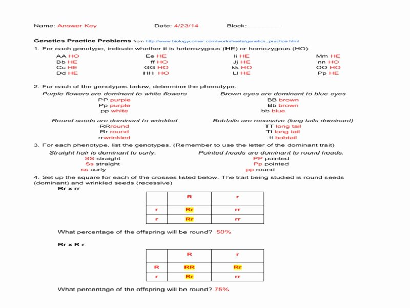 Genotypes and Phenotypes Worksheet Fresh Genetics Practice Answer Key Free Printable Worksheets