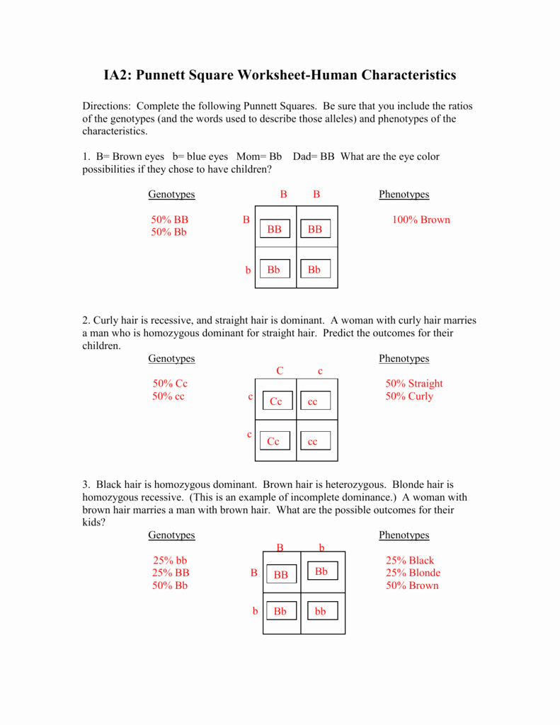 Genotypes and Phenotypes Worksheet Luxury Punnett Square Worksheet