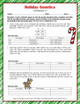 Genotypes and Phenotypes Worksheet Luxury Winter Holiday Genotype and Phenotype Punnett Square