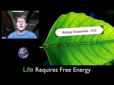 Gibbs Free Energy Worksheet Best Of 012 Life Requires Free Energy — Bozemanscience