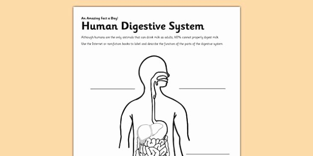 Human Digestive System Worksheet Elegant Human Digestive System Worksheet Worksheet Digestion