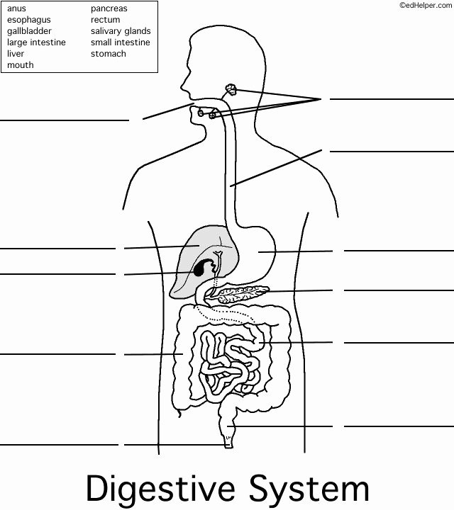 Human Digestive System Worksheet Luxury 15 Best Digestive System Images On Pinterest