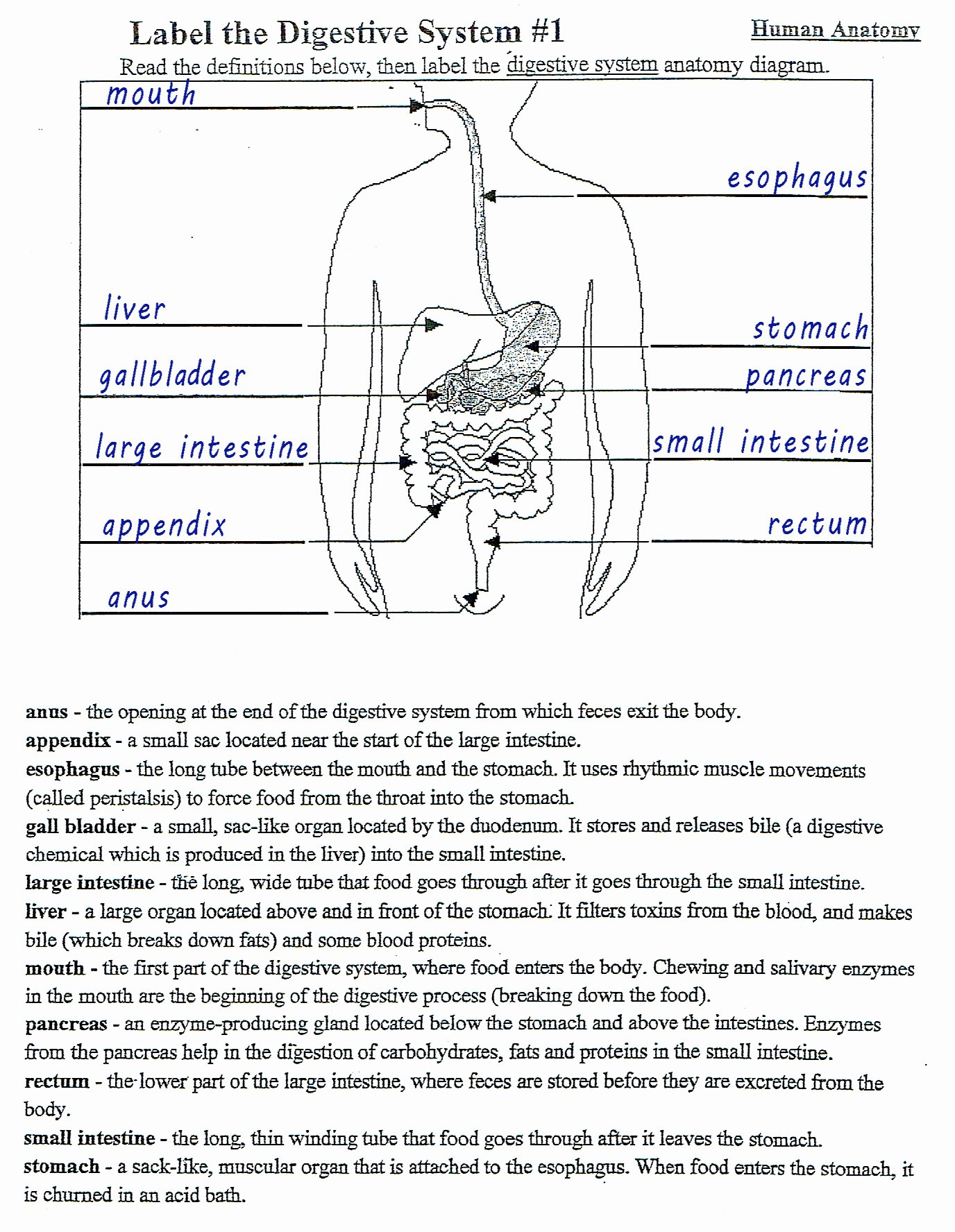 Human Digestive System Worksheet Luxury Mckenna Mrs Home Page