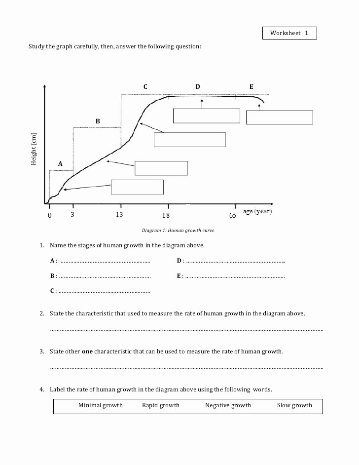 Human Population Growth Worksheet Answer Inspirational Worksheet 1 Growth