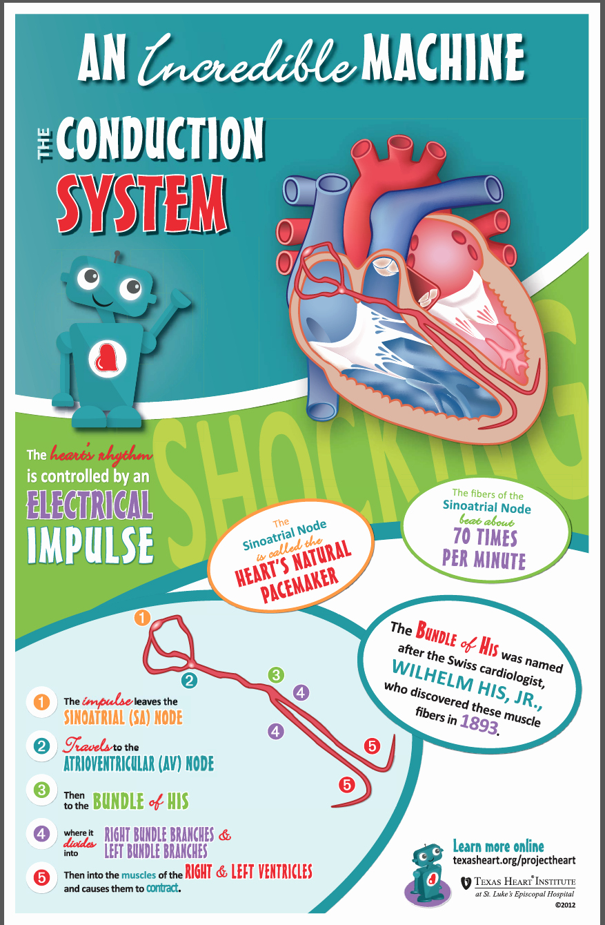 Incredible Human Machine Worksheet Awesome Fun Facts for Kids About the Conduction System An