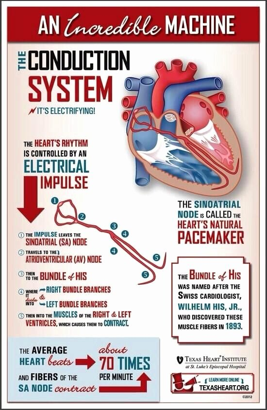 Incredible Human Machine Worksheet Best Of 17 Best Images About Heart Facts On Pinterest