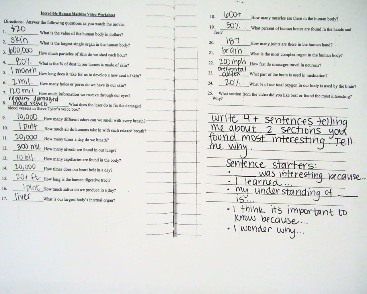 Incredible Human Machine Worksheet New the Incredible Human Machine Worksheets Answers