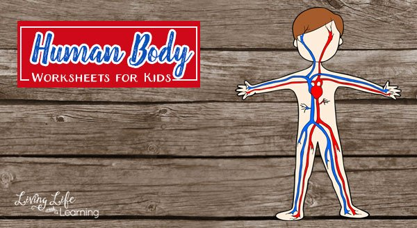 Inside the Living Body Worksheet Awesome Human Body Worksheets for Kids