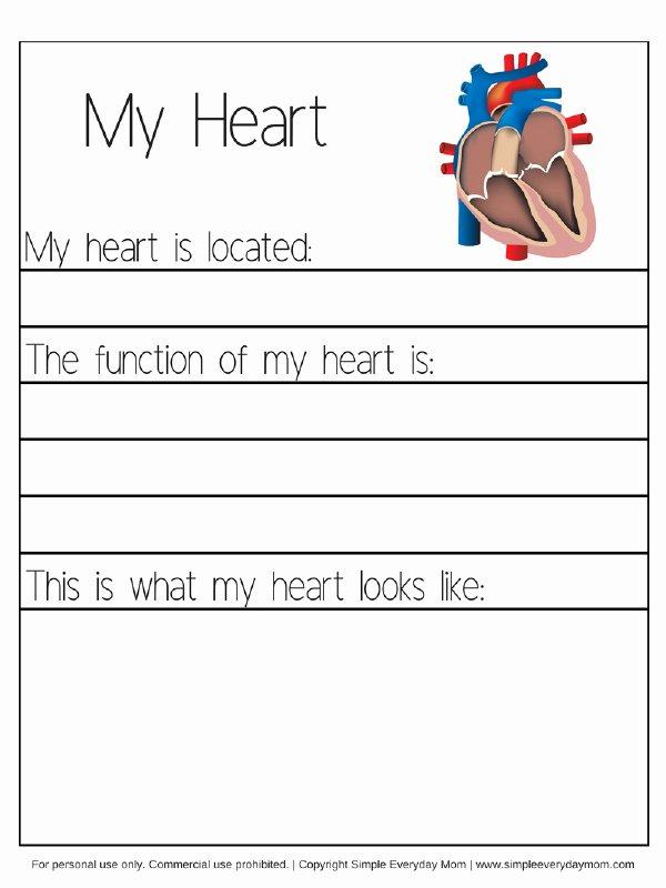 Inside the Living Body Worksheet Awesome Human Body Worksheets for Kindergarten & Up