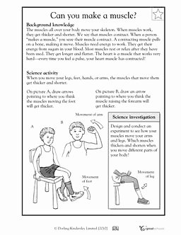 Inside the Living Body Worksheet Elegant 39 Best Images About Montessori Zoology On Pinterest