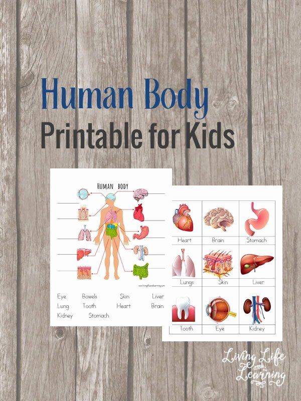Inside the Living Body Worksheet Elegant Human Body organs Printable Coloring Pages