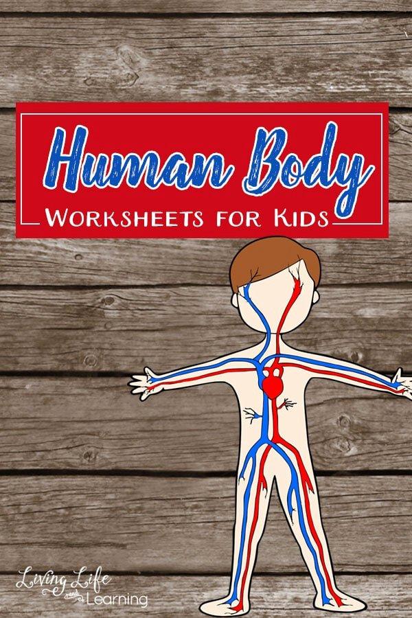 Inside the Living Body Worksheet Inspirational Human Body Worksheets for Kids