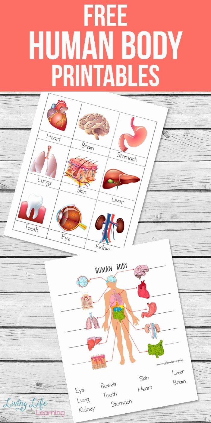 Inside the Living Body Worksheet New Human Body Printables for Kids