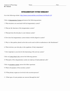 Integumentary System Worksheet Answers Awesome 1 Integumentary System Worksheet Key Concept the