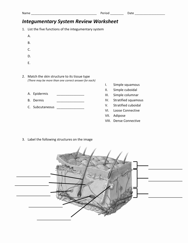 Integumentary System Worksheet Answers Beautiful Integumentary System Review Worksheet