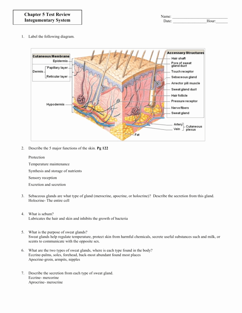 Integumentary System Worksheet Answers Elegant Chapter 5 the Integumentary System Worksheet Answers