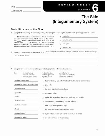 Integumentary System Worksheet Answers Inspirational Answers to Basic Structure Of the Skin Worksheet 1