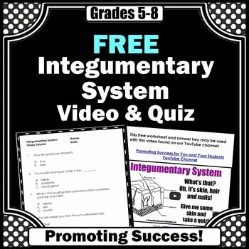 Integumentary System Worksheet Answers Lovely Free Integumentary System Activity Human Body Systems