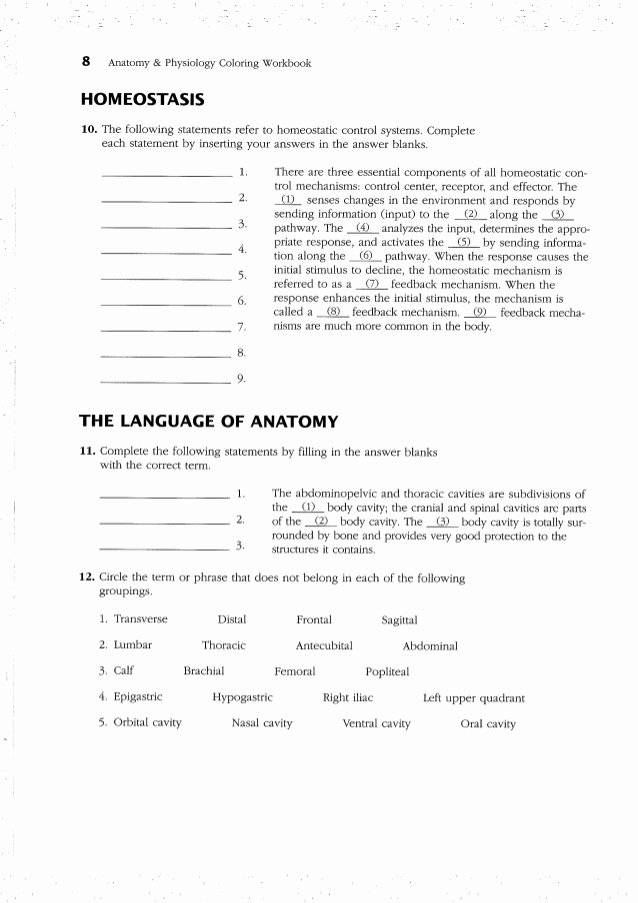 Integumentary System Worksheet Answers Lovely Integumentary System Worksheet Answer Key the Best