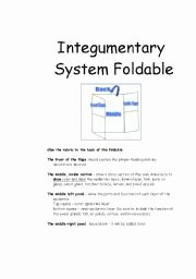 Integumentary System Worksheet Answers Luxury English Worksheets Integumentary System Foldable