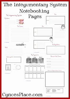 Integumentary System Worksheet Answers Unique 1000 Images About Systems On Pinterest