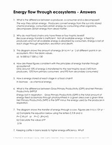 Introduction to Energy Worksheet Beautiful 10 Best Of Energy Flow Worksheets Food Web Energy