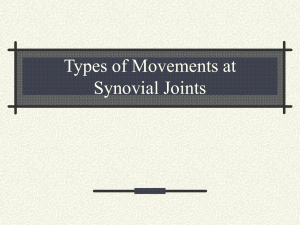 Joints and Movement Worksheet Best Of Joints & Movement Worksheet