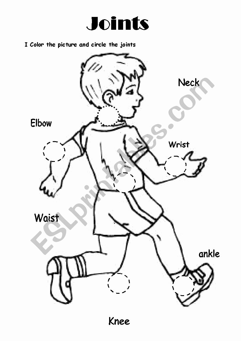Joints and Movement Worksheet Best Of Science Joints Esl Worksheet by Geovanna