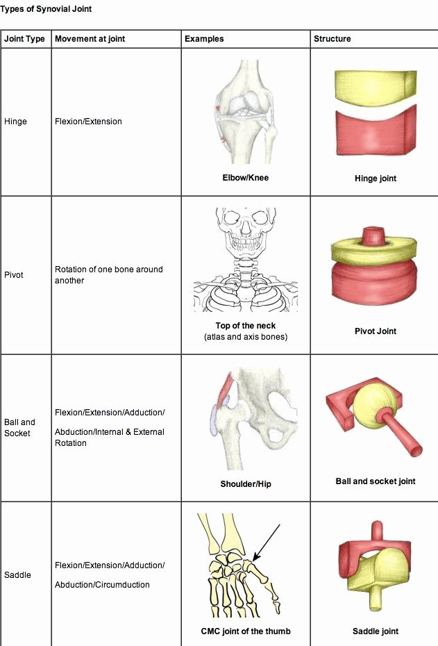 Joints and Movement Worksheet Elegant 25 Best Ideas About Human Joints On Pinterest