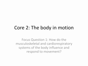 Joints and Movement Worksheet Elegant Joints & Movement Worksheet