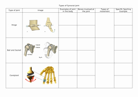 Joints and Movement Worksheet Elegant Types Of Synovial Joint by Katie22russell