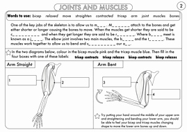 Joints and Movement Worksheet Fresh Year 3 Animals Including Humans the Skeleton Muscles