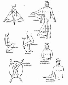 Joints and Movement Worksheet Lovely Joints Of the Body Worksheet