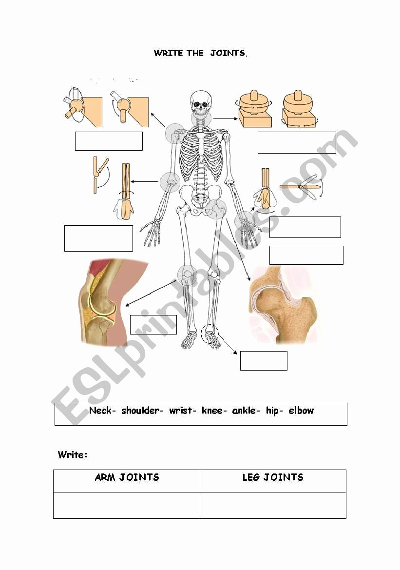 Joints and Movement Worksheet Luxury the Joints Esl Worksheet by isdefran