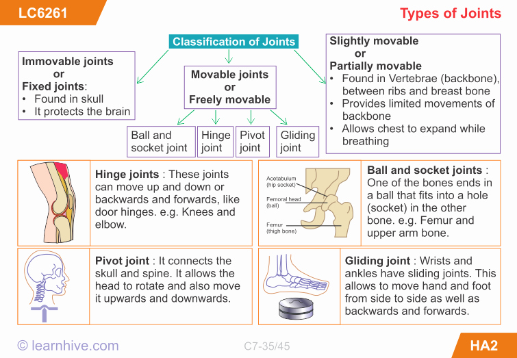 Joints and Movement Worksheet New Learnhive