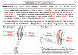 Joints and Movement Worksheet New Year 3 Animals Including Humans the Skeleton Muscles
