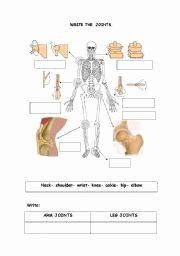 Joints and Movement Worksheet Unique the Joints Esl Worksheet by isdefran